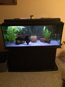 For Sale 70gal Fish tank