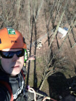 Tree removal, pruning, trimming, stump grinding, Cert, Lic & Ins
