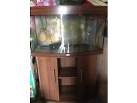 3ft Bow front Fish Tank and Stand