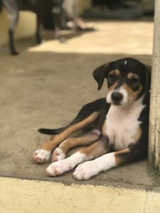 Rescue Puppy for Adoption