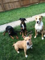 Professional Large &Small breed dog walker /pet sitter