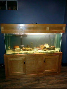 Fish Tank and fish London Ontario image 1