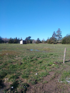 Beautiful pasture for your horse with outside shelter