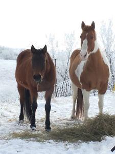 Horse Hobby Farm (Strathmore Dalum Drumheller)