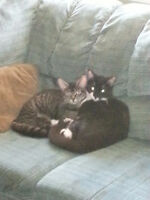Two Kitties need a Home!!