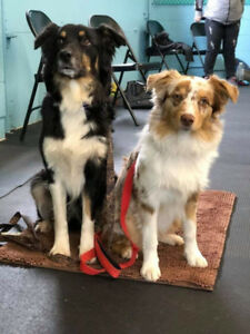 OVLPN - 2 lost dogs in Calabogie