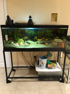 75 gallon fish tank, filter system and fish