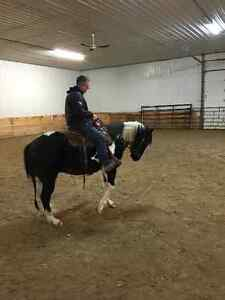 Horse part board available $175 per month