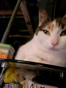 Patches - free to good home w/ food/litter/new box
