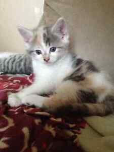 Kitten Free to loving homes only
