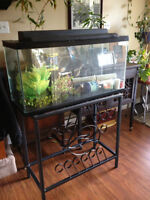 33 Glallon tank with Wrought Iron Stand and accessories