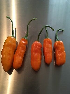 20 QUEEN LAURIE PEPPER SEED RARE SWEET-MEDIUM HOT  EXCELLENT FOR STUFFED PEPPERS