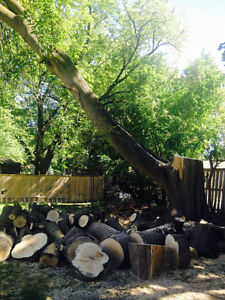 Wanted handyman to remove a branch of a tree from my backyard