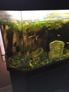 fish and two        tanks