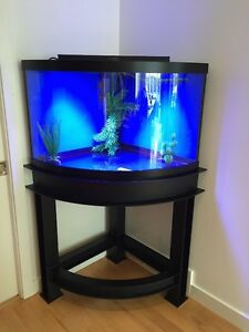 Aquarium: 54-gallon corner tank with a custom steel stand Kitchener / Waterloo Kitchener Area image 2