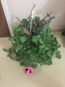 Variety of Artificial Plants (Hanging/ Tabletop)