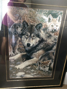 Beautiful Large framed Wolf Family picture