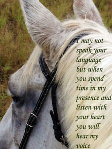 A Horse For My Soul
