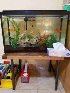 35 gallon tank w fish, accessories and food