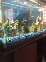 Fish tank with stand must go