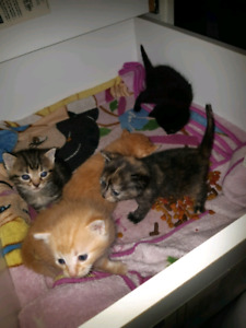 Kittens to rehome ASAP.