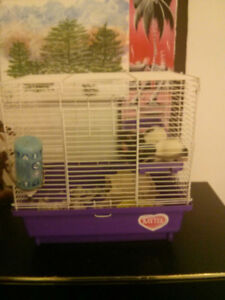 2 baby male rats for sale with cage 30 OBO