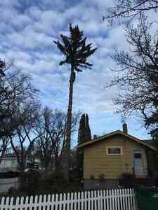 Anytime Tree Removal Moose Jaw Regina Area image 7