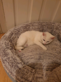 sell my beautiful cat. she is 10 month