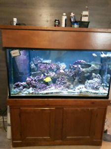 Salt Water Tank (COMPLETE)