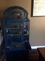 8 month old Green Cheek Conure and large cage.