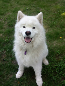 Professional Dog Walking and Pet Sitting Services - Orleans
