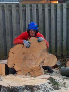 Your neighbourhood Tree Service. Hire the insured KWTreeBarber Kitchener / Waterloo Kitchener Area image 3