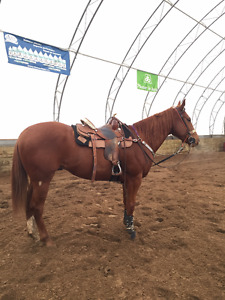 Looking For/ An Experience Barrel Horse for Lease!