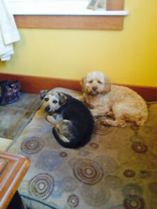 DOG DAYCARE/BOARDING NEEDED IN CHARLOTTETOWN