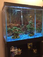 REDUCED! 25 gallon fish tank, stand, and fish