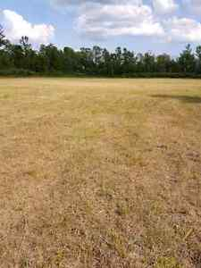 40 Acres on County Road 6, 10 minutes to Cat Centre Kingston Kingston Area image 4