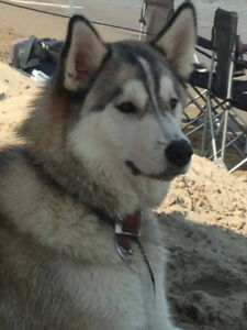 Missing or stolen dogs