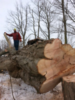 Professional Tree removal and cutting services