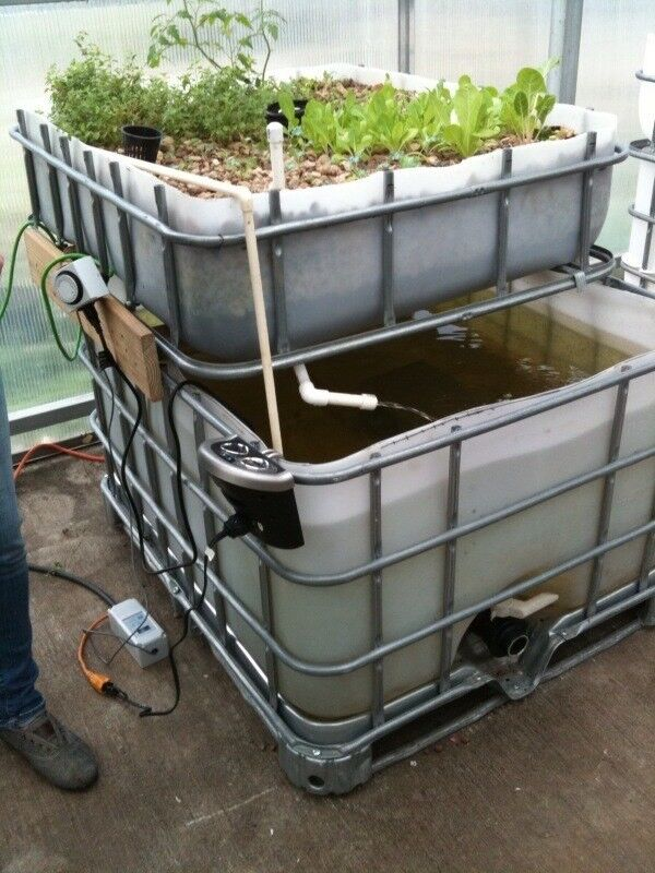 Large Aquaponic System w/ 200 gallon tank. 48x40 grow bed for organic gardening!
