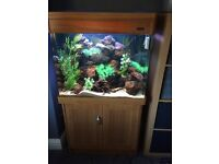 Aqua one regency 80 tank complete with fish