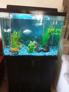 60gal Aquarium w/ everything you need to get started