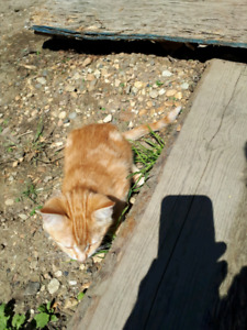 Cats to give away