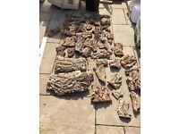 Cork bark, lizards, vivarium