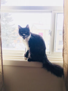 Free: kid friendly cat to good home
