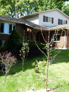 Huge house with acreage walk to downtown Brighton