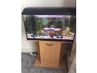 130 LITRE FISH TANK + CABINET & EQUIPMENTS FOR SALE £130 ONO