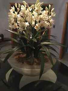 Unique Custom Orchid Arrangment