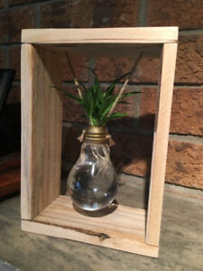 Rustic Reclaimed Wood Hanging Spider Plant