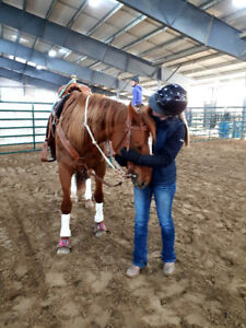 LF: Rodeo Horse (Please Read Full Ad)