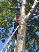 Storm Cleanup & Tree Removal